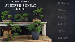 How To Care For Juniper Bonsai ( 2019 ) A JUNIPER CRASH COURSE