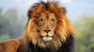 غرائب  و عجائب الحيوانات