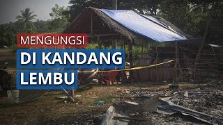 Dua keluarga Terpaksa Mengungsi di Kandang Lembu seusai Rumahnya Ludes Terbakar