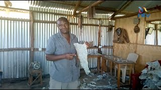 Kisumu innovator profiting from tanning fish skin into leather