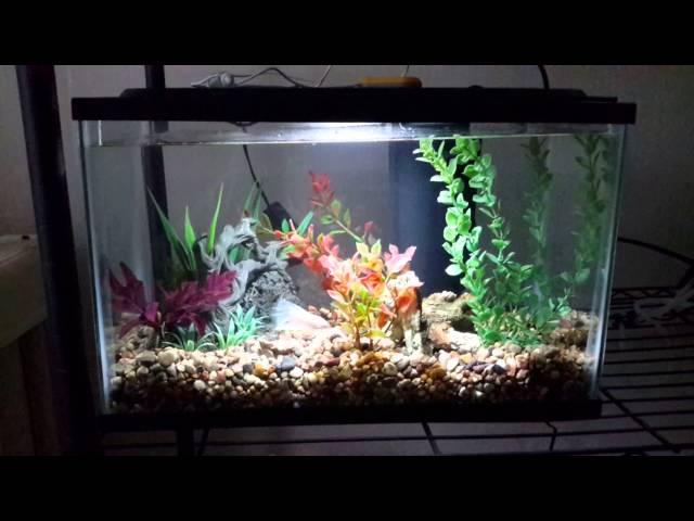 Natural 5 gallon betta fish tank