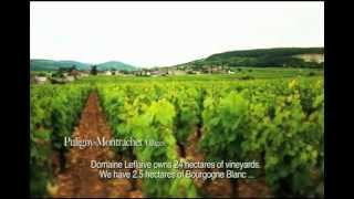 Domaine Leflaive: A Path to Follow