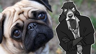 What's Wrong With PUGS (and Pedigree Dog Breeding)   Cynical Reviews