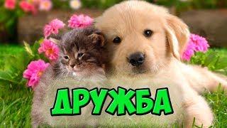 Дружба между собаками и кошками/ Friends forever