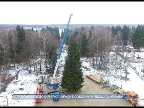 Елка, которая украсит Соборную площадь Кремля, будет из Домодедова