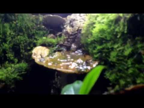 Dart frog vivarium planted with waterfall and drip wall - 9 days old