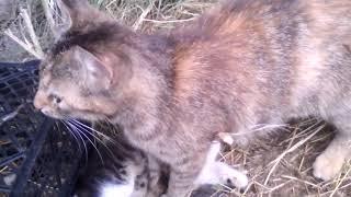 Наблюдение за животными , котята.