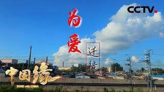 《中国缘·爱上中国》为爱迁徙:有一种爱叫为了治愈你 我愿陪你颠沛流离 20181004 | CCTV中文国际