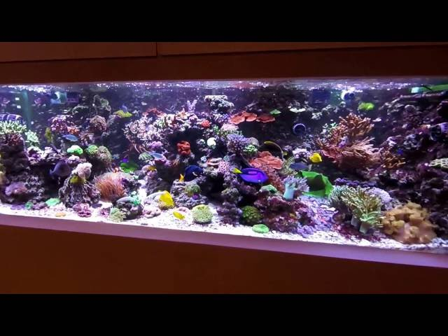 My 1.200 liters (300 gallon) Mixed Reef Tank