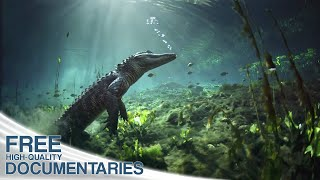 Breathtaking insights into the amazing ecosystem of the Everglades National Park