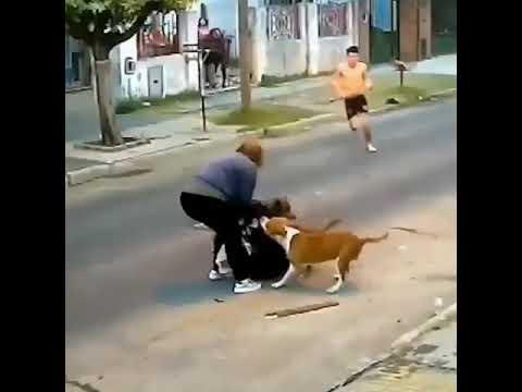 لحظات مرعبة لسيدة أرجنتينية تعرضت لهجوم من كلاب شرسة-