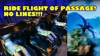 Rode Flight of Passage 3x in 1 Hour! NO LINES! Disney After Hours Event - Animal Kingdom