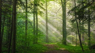 Healing Music, Relaxation Music, Chakra, Relaxing Music for Stress Relief, ☯3218