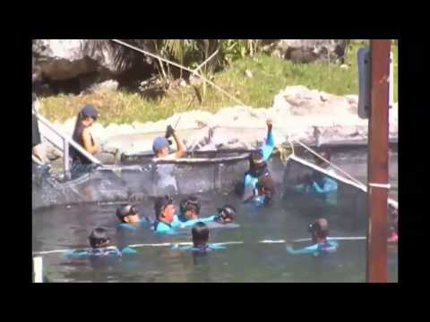 Mexican Marine Parks Exposed (VOSTFR)