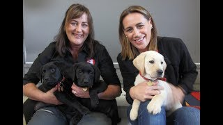 Youtube thumbnail for Jenny May visits the NZ Blind Foundation Guide Dogs Breeding & Training Centre