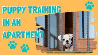 Puppy Training In An Apartment or Condo