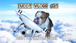 Buddy the bulldog vs. phantom 4 drone... WHO WILL WIN? (vlog #26)