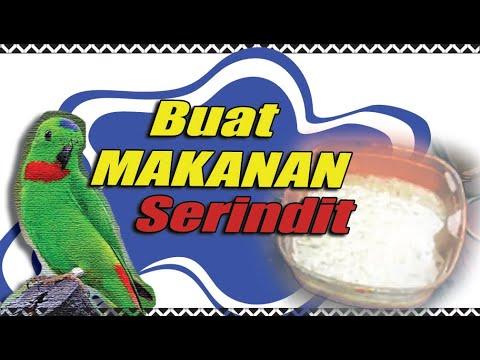 Makanan Burung Serindit Peliharaan
