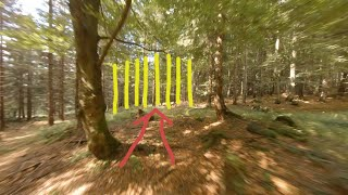 FPV drone lost in the forest