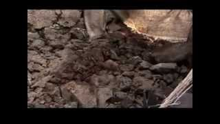 preview picture of video 'La prise de la ville de Goma en novembre 2012 par le M23 en présence de la MONUSCO'