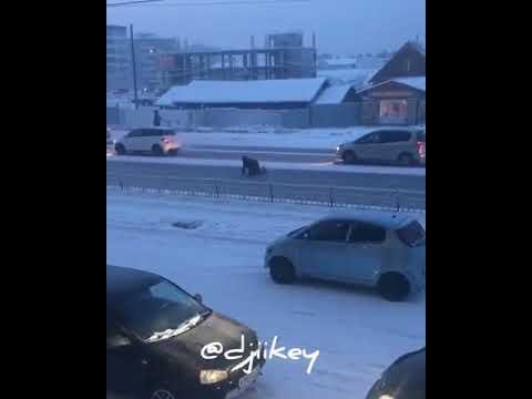 Видеофакт: В Якутске пешеход на четвереньках переползает оживленную улицу