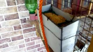 My home automatic bird cage feeder