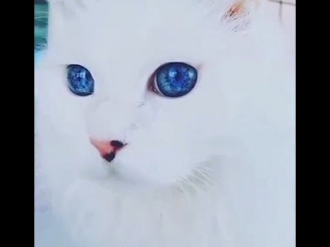 Most Beautiful Cat Eyes In The World