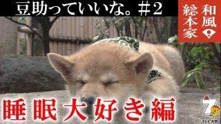 豆助っていいな。#2睡眠大好き編