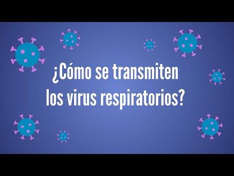 Papillomavirus verrue plane