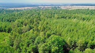 Above Dense Forests DJI Phantom 4 Pro
