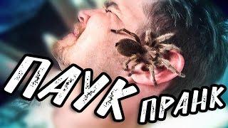 ОГРОМНЫЙ ПАУК на ЛИЦО ДРУГУ | #ПРАНК | Spider | Face | prank Разыграли друга |  ЖЕСТОКИЙ ПРИКОЛ!