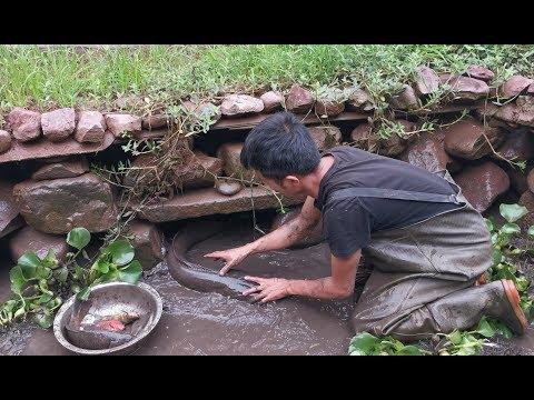 鱼塘清塘之后去捡漏,听见石缝里有响声用手一摸有大货,竟然没人要