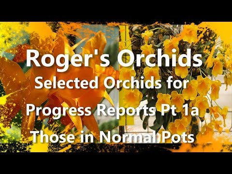 Selected Orchids for Progress Reports Pt 1a - Those in Normal Pots