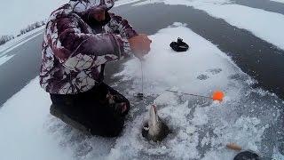 Какая погода хороша для ловли щуки зимой