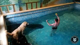 Piscine : Une petite nage pour Koda