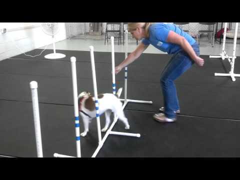 Stella, an adopted Beagle & English Bulldog Mix in Scituate, MA
