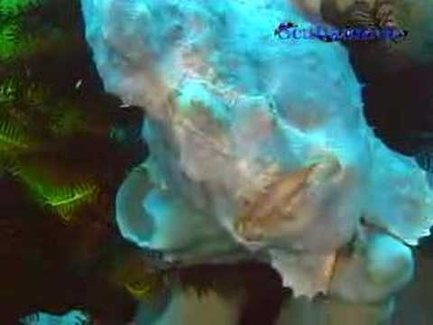 Unterwasserwelt, Allgemein,Philippinen