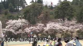 この春にいきたい!新潟村松公園桜まつり