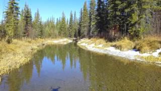 Calgary Drones - Flight through Griffith woods