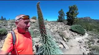 Тенерифе 360 VR видео: Тахинасте - эндермик на Тенерифе.