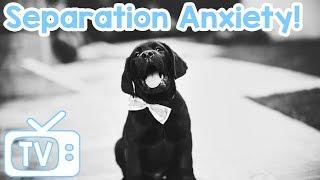 DogMusicTV:TVforDogsleftAlone!ReduceSeparationAnxiety!