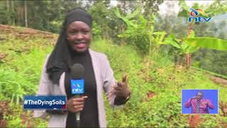 Kenya's soils are sick and in need of rehabilitation || #TheDyingSoils