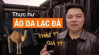 Áo da lạc đà tại Việt Nam có thật không?