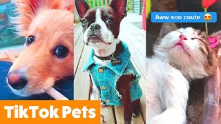 Animal TikToks That Will Make You AWW | Funny Pet Videos