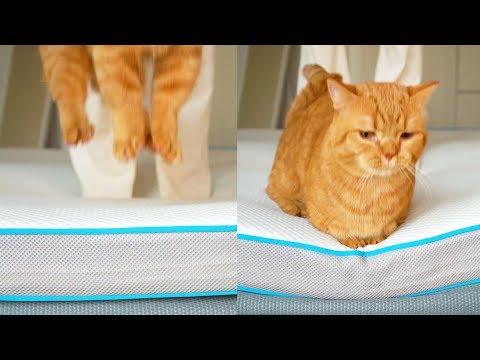 貓咪版泰山壓頂