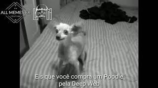 Eis que você compra um Poodle pela Deep Web