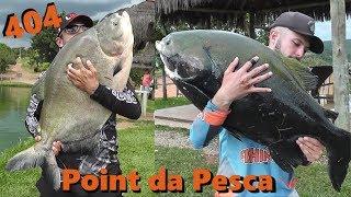 Gigantes nas superfície no Point - Fishingtur na Tv 404
