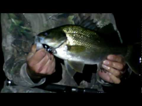 Australian Bass Fishing – Ocean Storm Fishing Tackle – Riley's Winged Cicada bass lure
