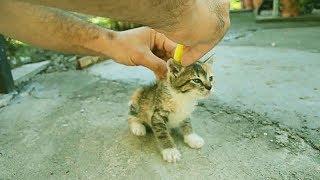 ЭКСПЕРИМЕНТЫ НАД КОТАМИ, которые ПОРВАЛИ Интернет. приколы с котами