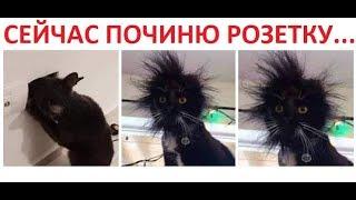 Лютые приколы. Кот электрик